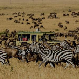 safari_africa